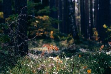 Треккинг в Себежском национальном парке (15 км)