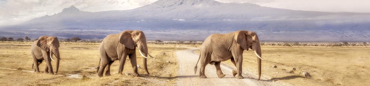 Экскурсии в Танзании